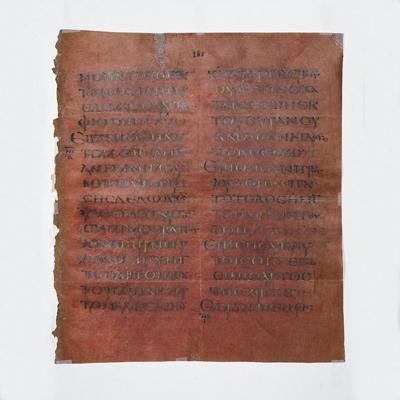 Purple codex leaf